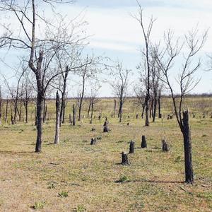 Necesitatea măririi suprafeţelor împădurite pentru combaterea deşertificării, degradării terenurilor şi secetei